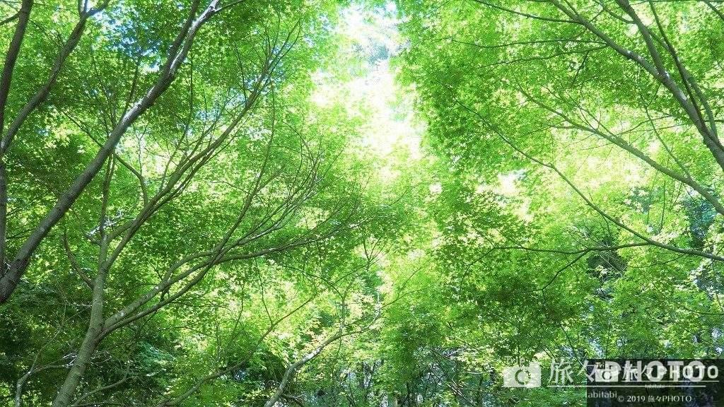 河内藤園-紅葉