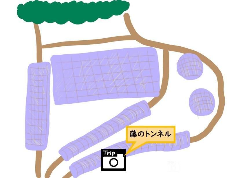 河内藤園MAP-藤のトンネル