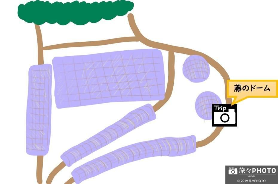河内藤園MAP-藤のドーム
