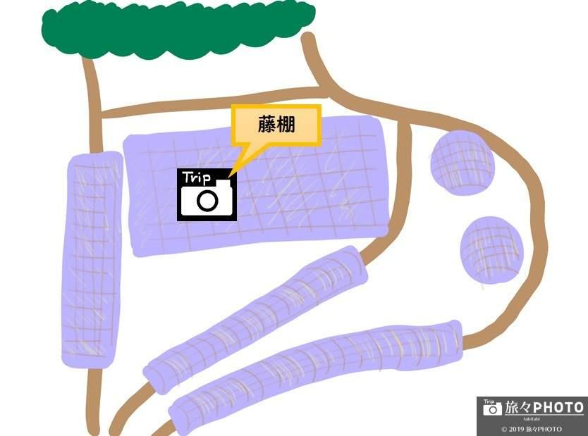 河内藤園MAP-藤棚