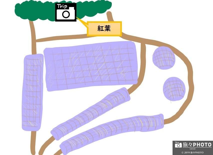 河内藤園MAP-紅葉