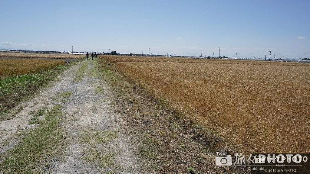 スイーツオルレ 麦畑