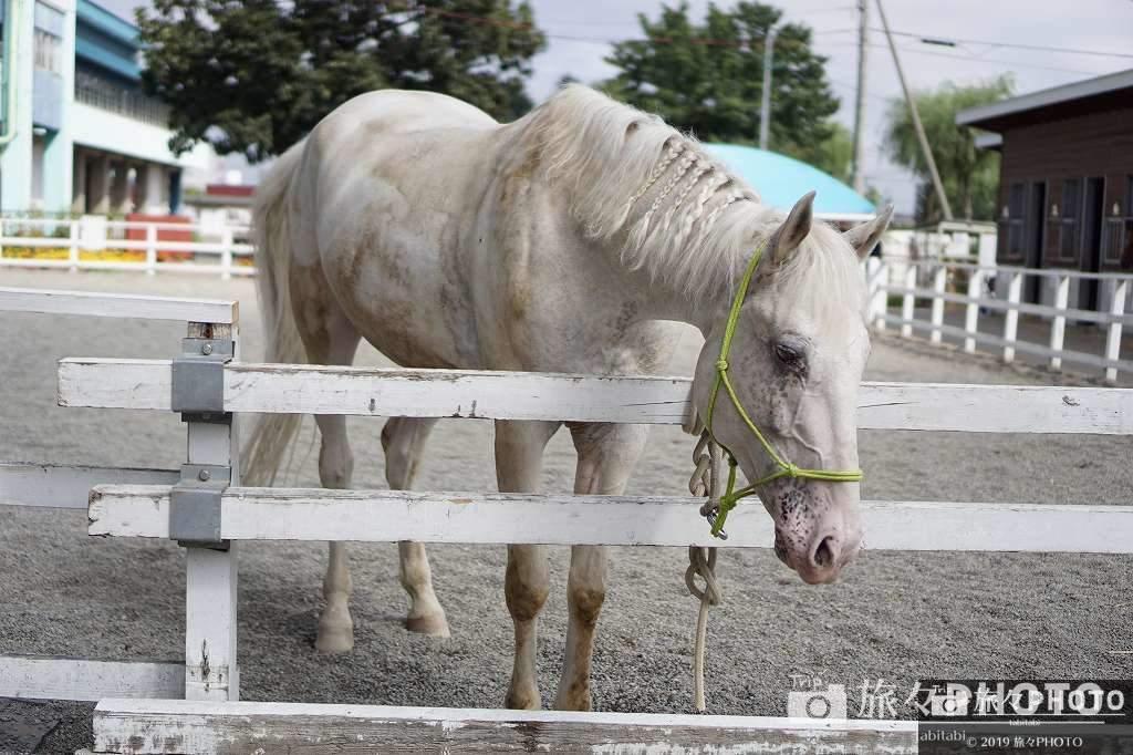 帯広競馬場ふれあい動物園の馬