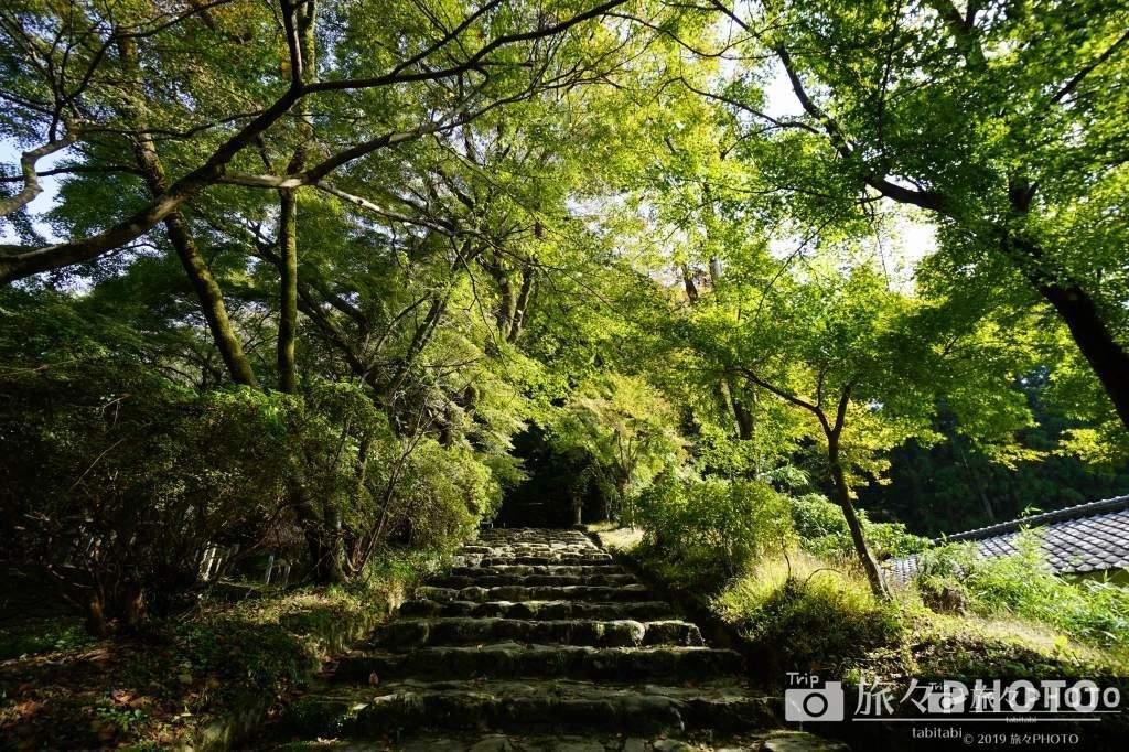 秋月城の垂裕神社の参道