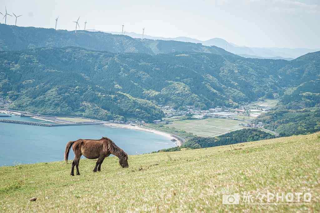 都井岬の観光スポット①野生の馬(小松ヶ丘・扇山)