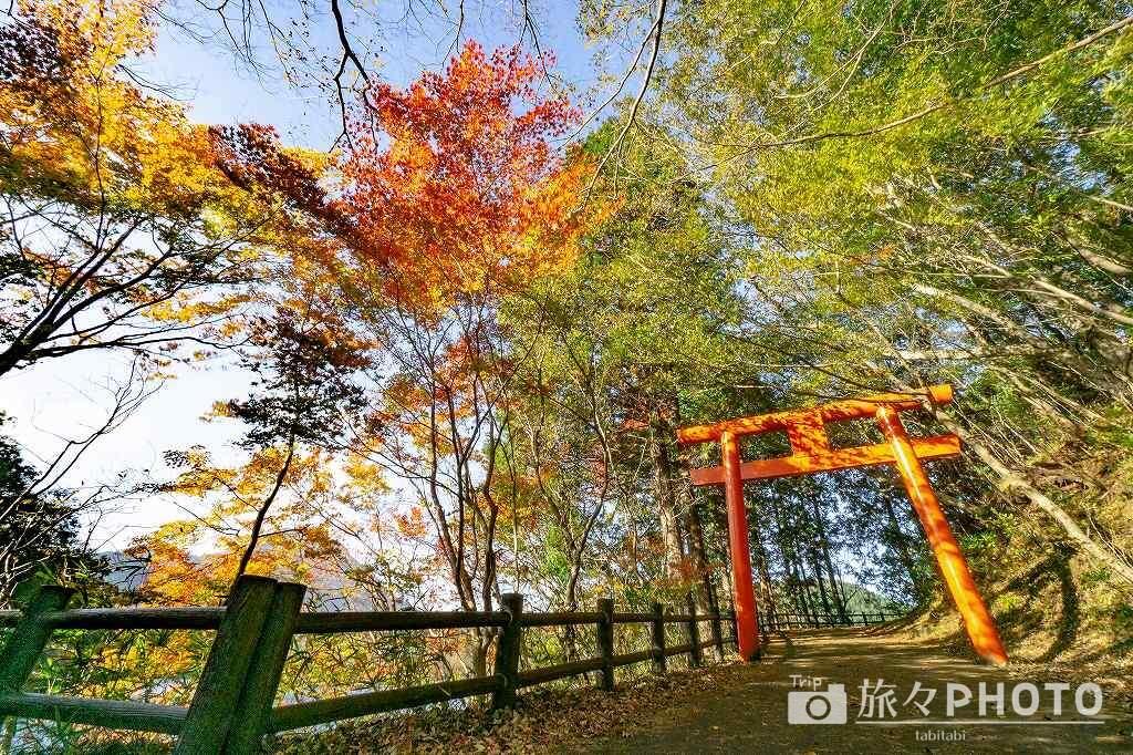志高湖の紅葉
