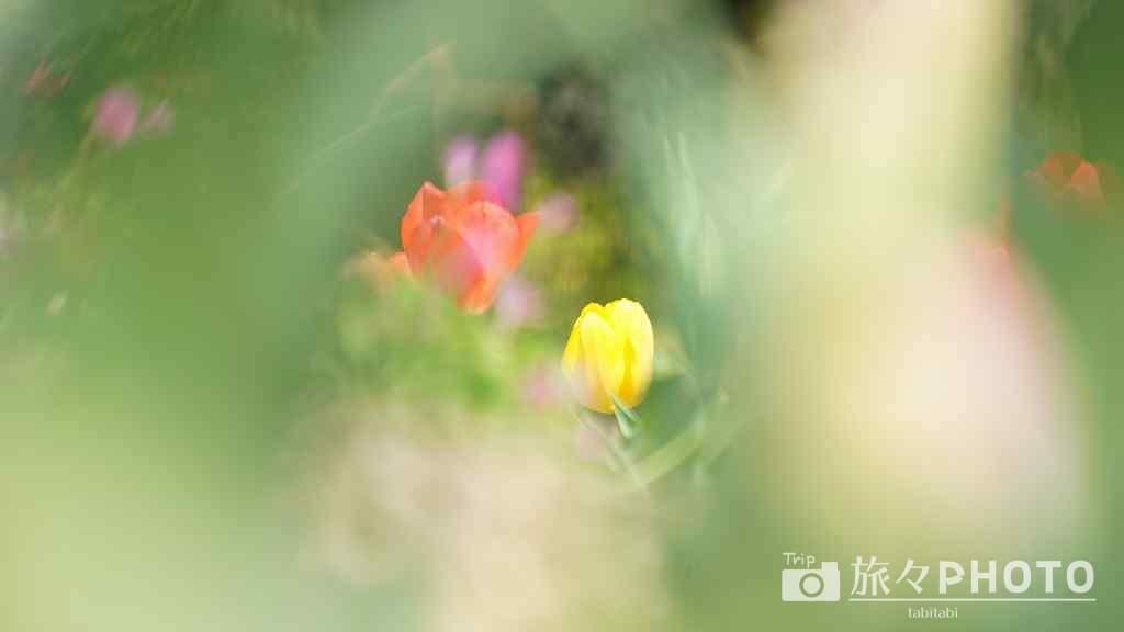 春の能古島