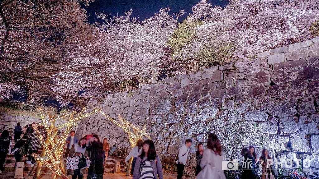福岡城跡の桜