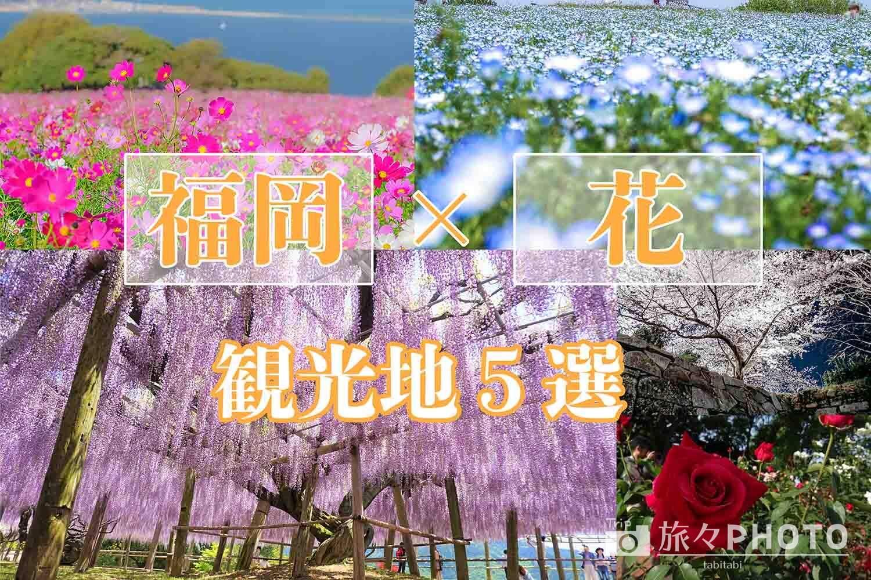 福岡の花の見れる観光地アイキャッチ画像