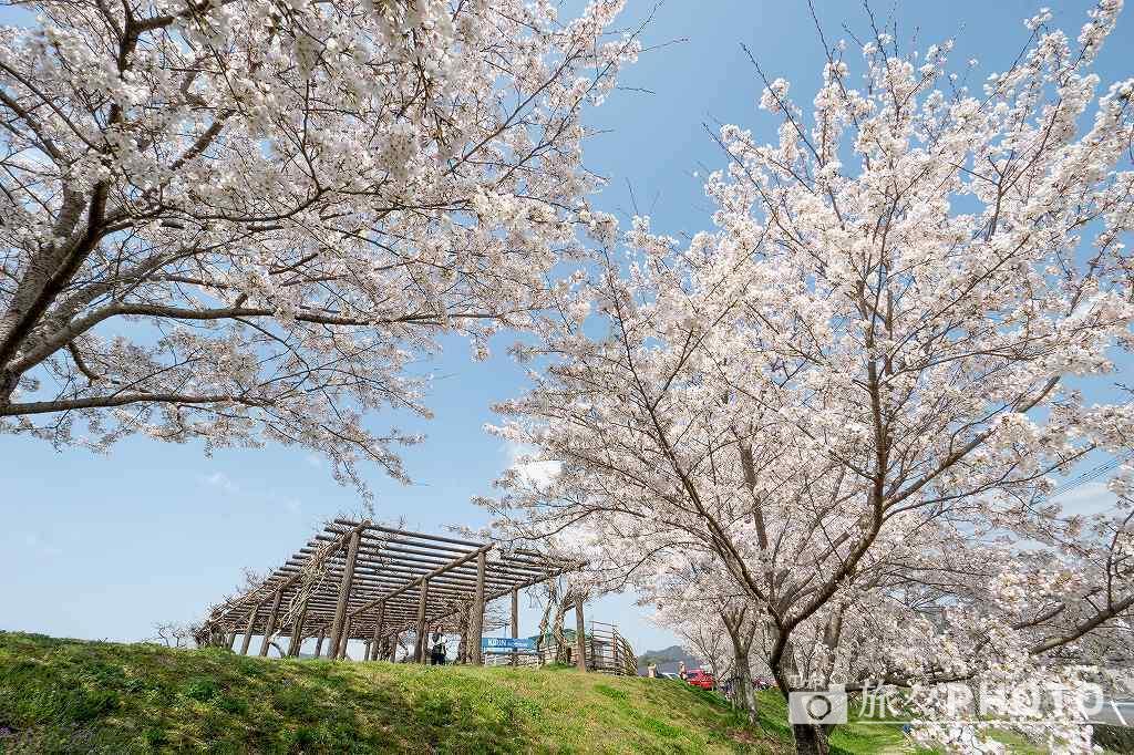 みなみの里の桜