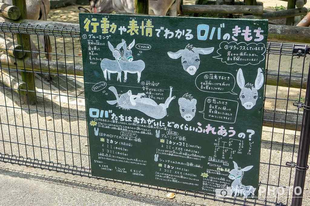 到津の森公園ロバ