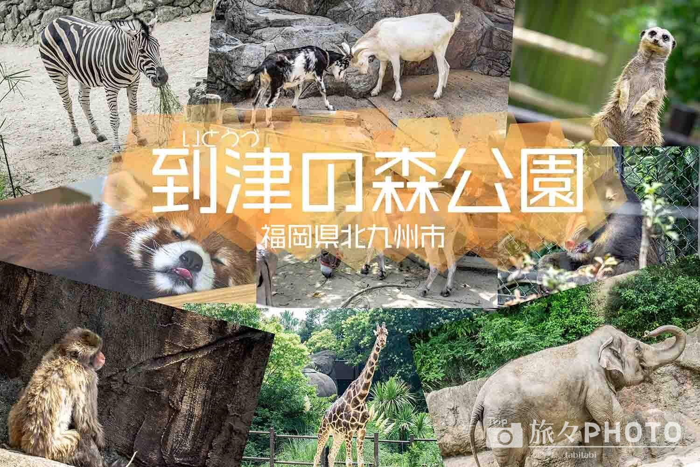 到津の森公園アイキャッチ画像