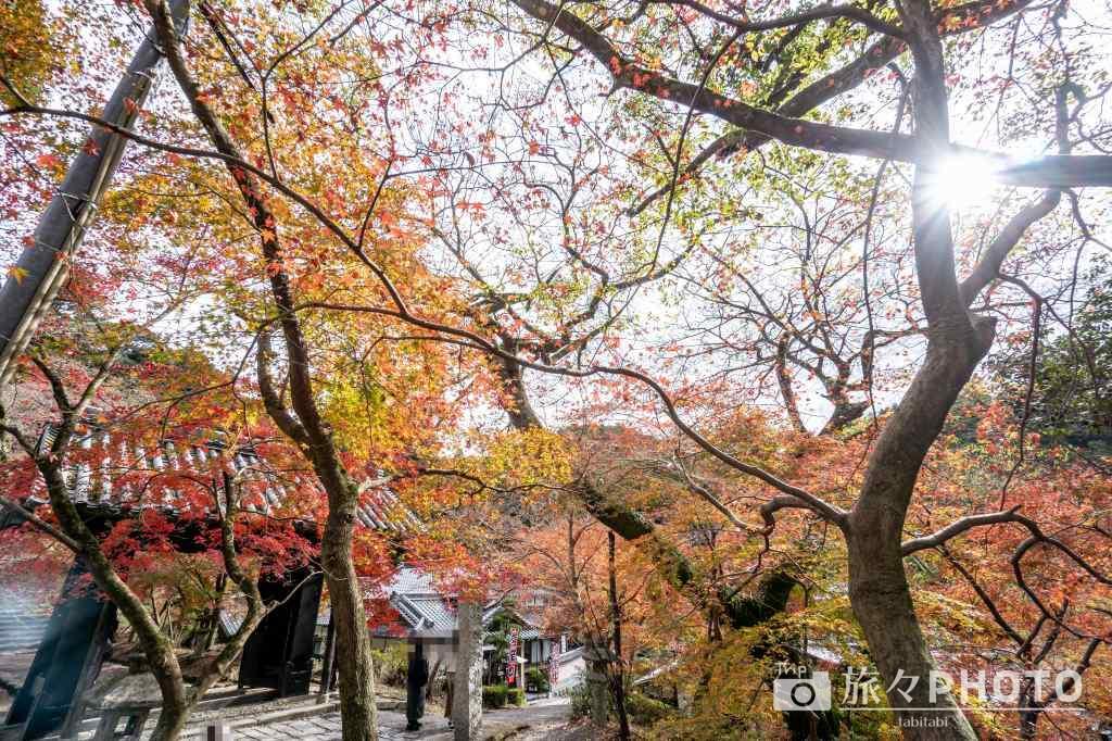 秋月城跡の紅葉