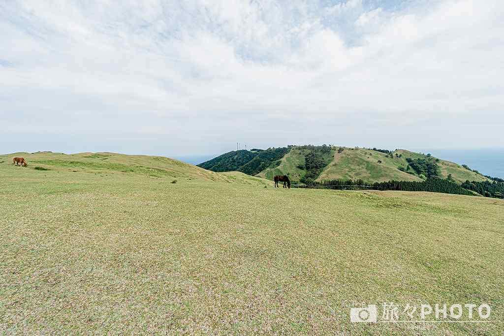 都井岬の小松ヶ丘