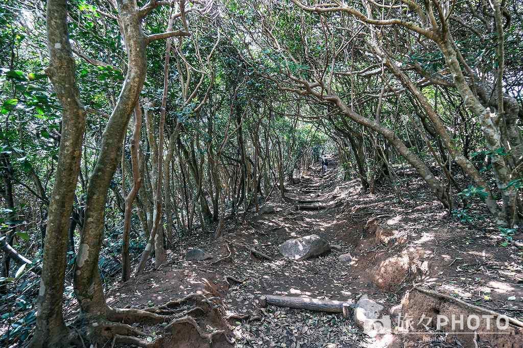 糸島トトロの森