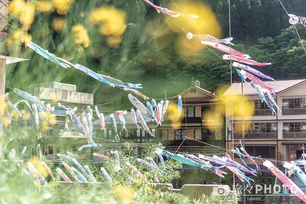 花越しに見た杖立温泉の鯉のぼり